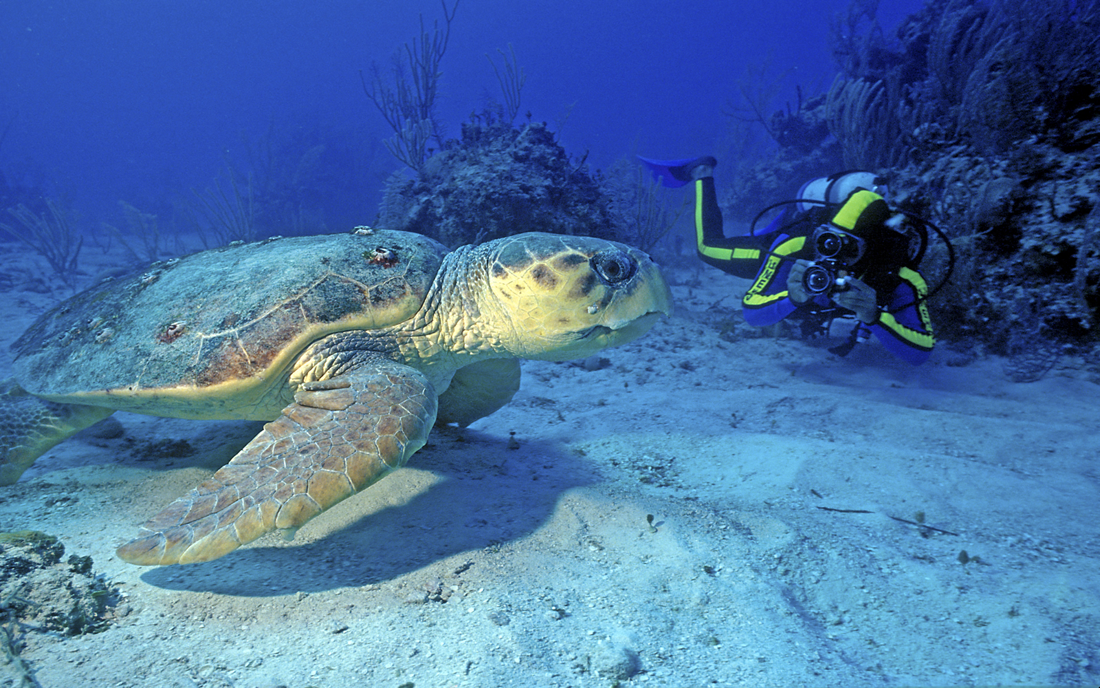 Scuba Diving with turtles in St Lucia| Fleewinter tailor-made holidays
