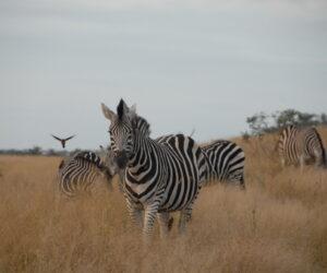 Kruger Fly-in Safaris