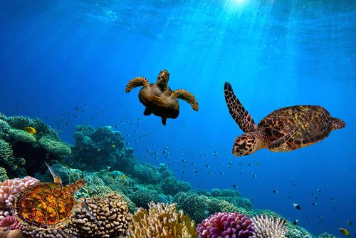 Swim with the Hawksbill Turtles - Fleewinter tailor-made holidays