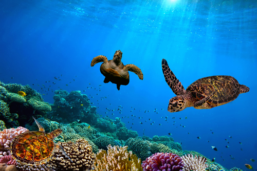 Swim with the Hawksbill Turtles - Fleewinter tailor-made holidays