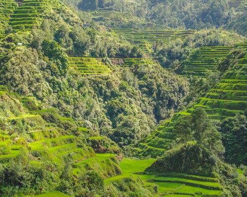 batad-rice-terraces