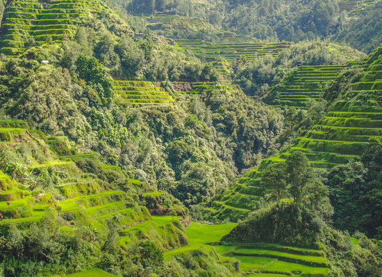 batad-rice-terraces