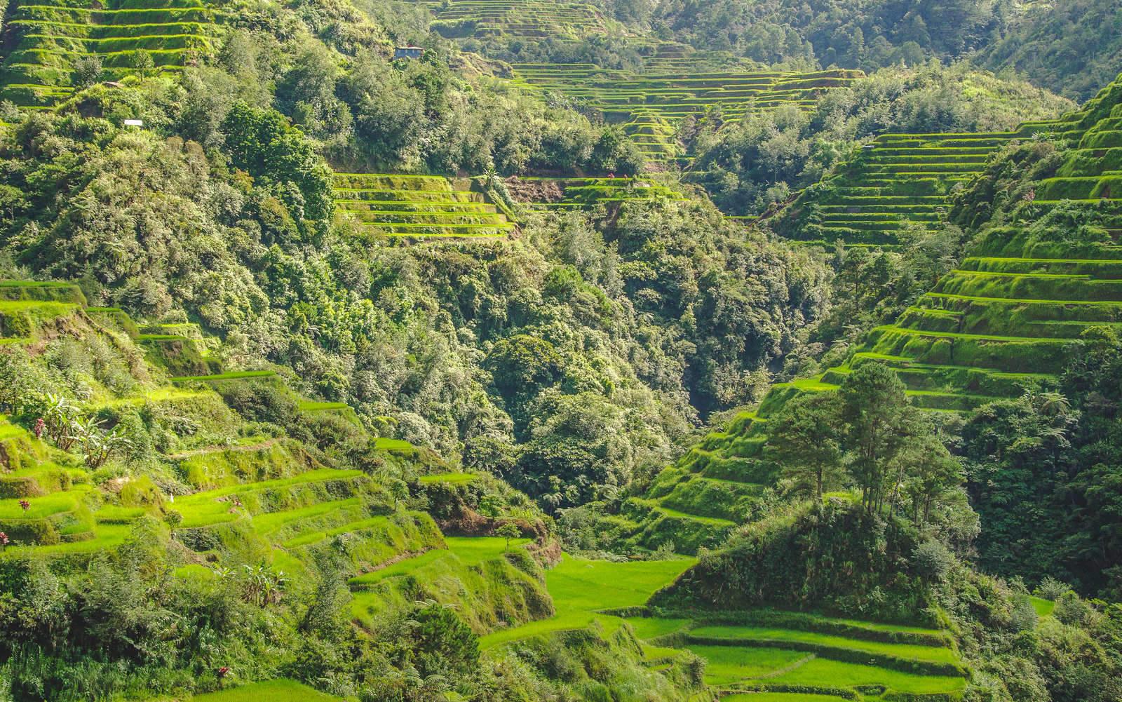 rice-terraces-batad