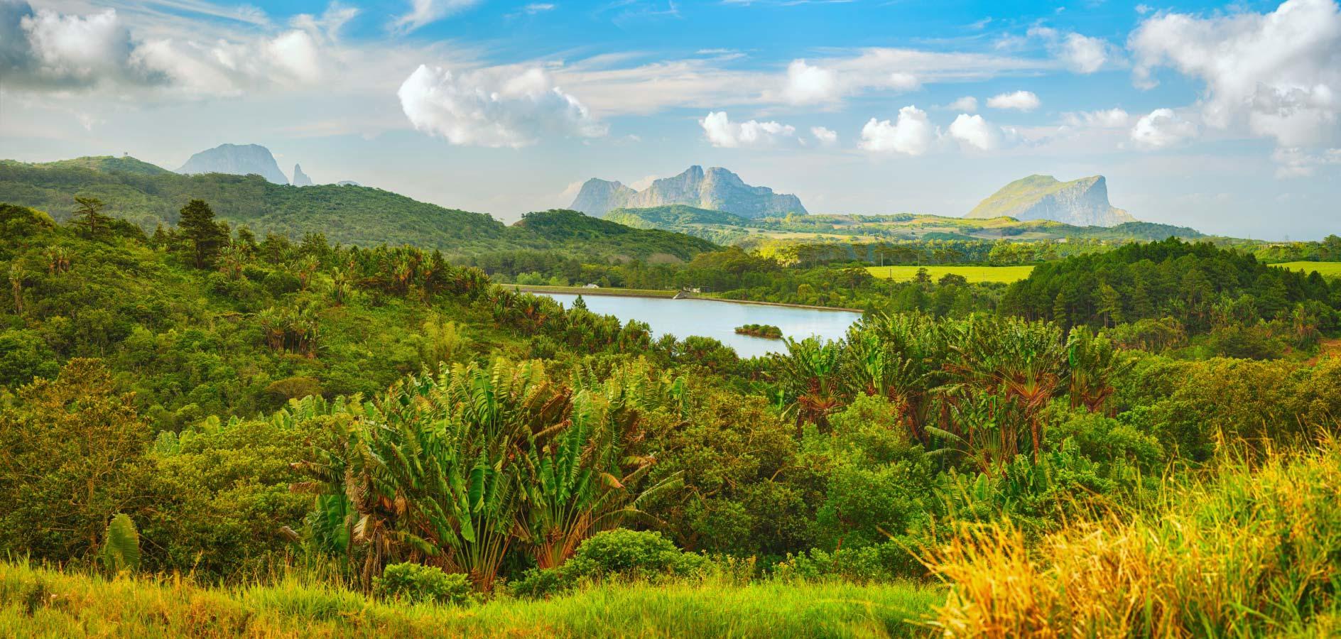 Mauritius Rainforest