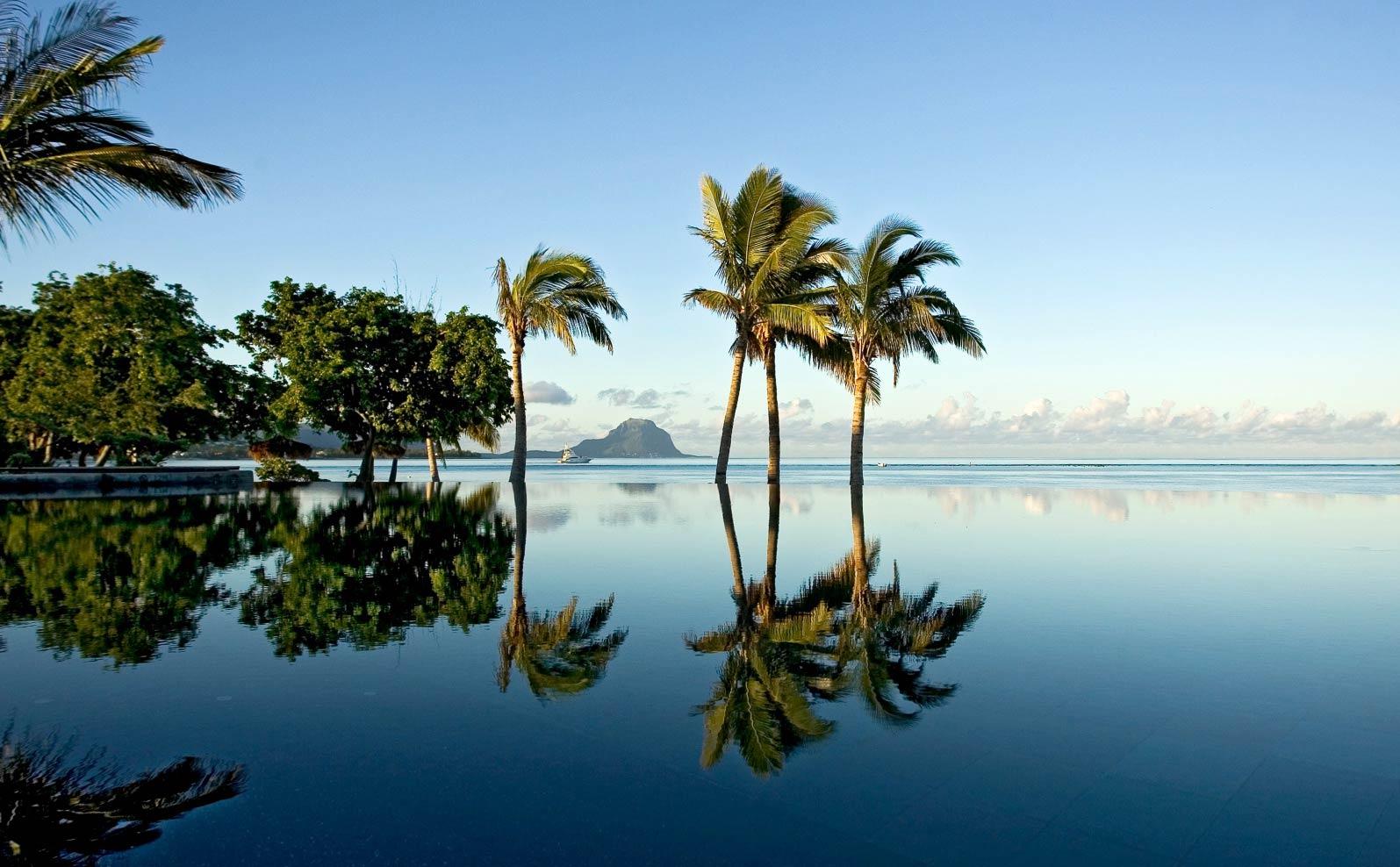 Mauritius Beach Palm Trees