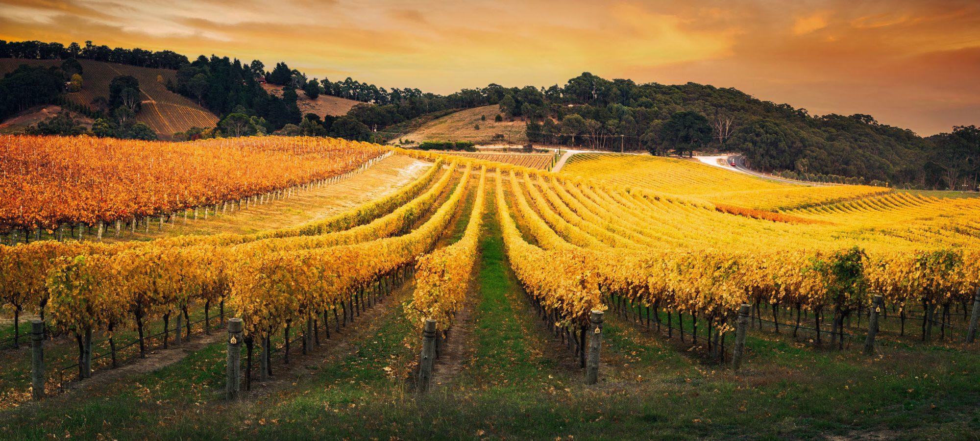 Australia Barossa Valley Vineyard Holidays