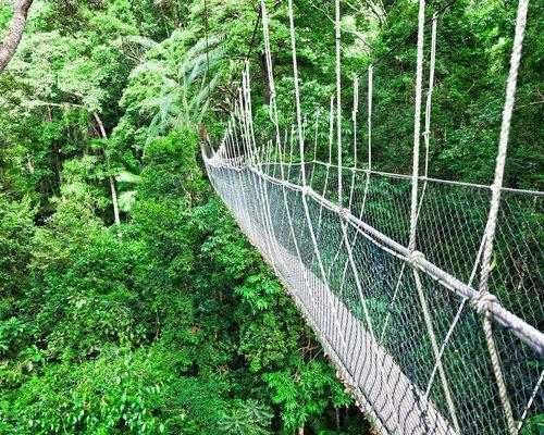 canopy-borneo