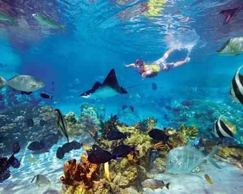 Lorde Howe Island Australia Snorkeling