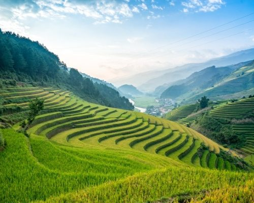 Chiang Mai rice fields