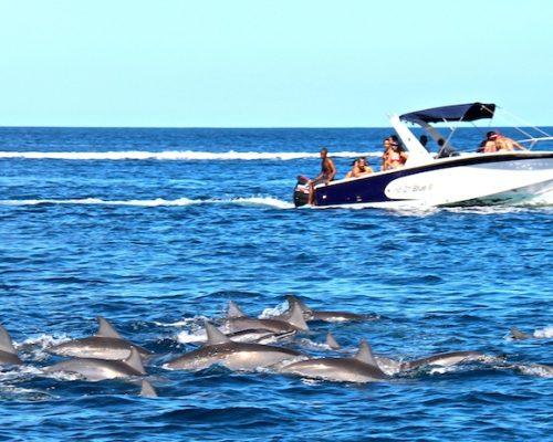 Mauritius Holiday Sailing Dolphins