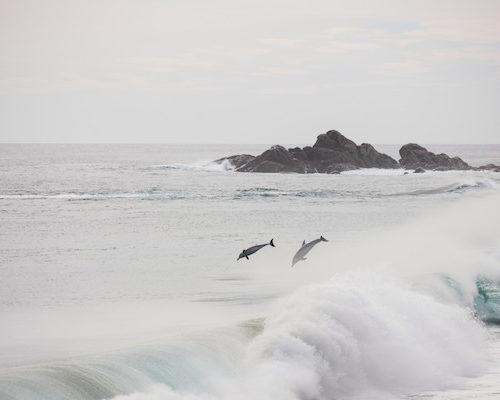 Dolphins WA