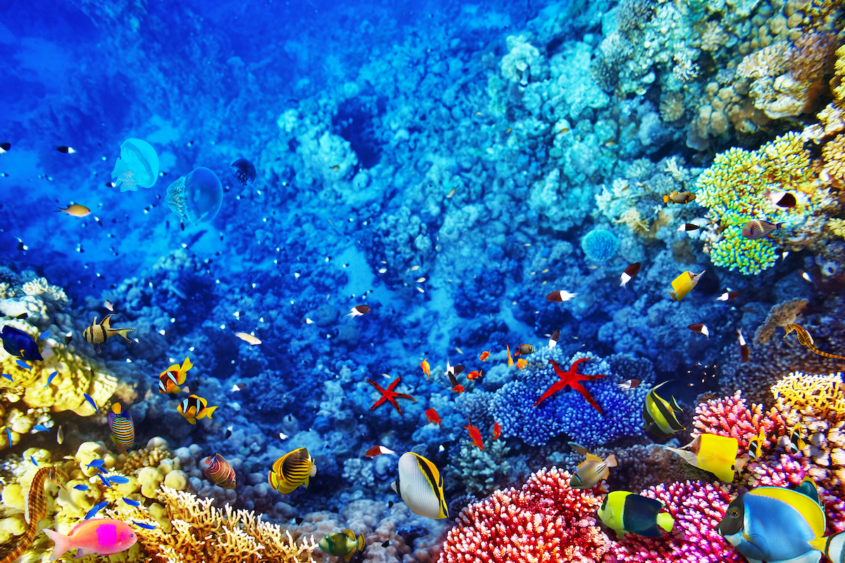 Wonderful And Beautiful Underwater World With Corals Tropical Fish Fleewinter