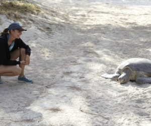 Heron Island turtles