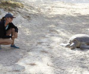 Heron Island turtles