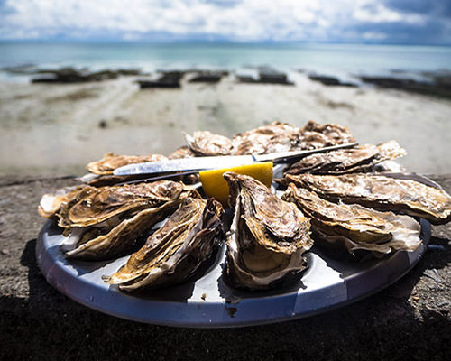 Sample Oysters farmed in Ston